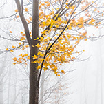 Fall In The Fog
